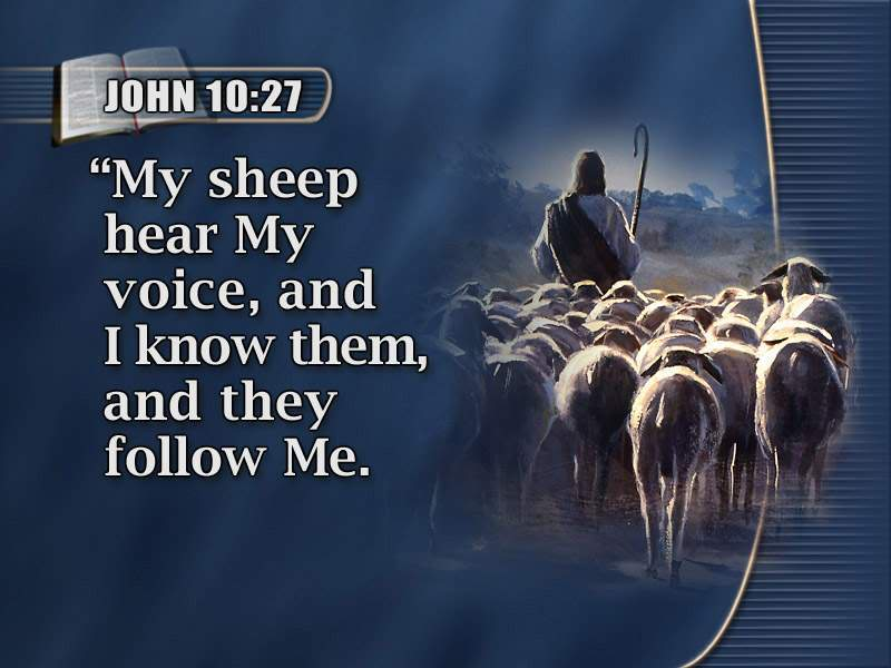 Image result for sheep hearing the shepherd's voice